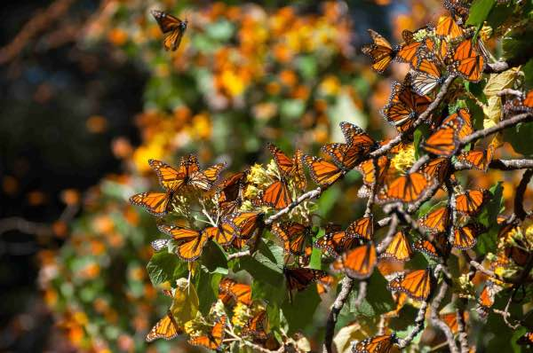 monarch butterfly migration mexico city private tour horse ride