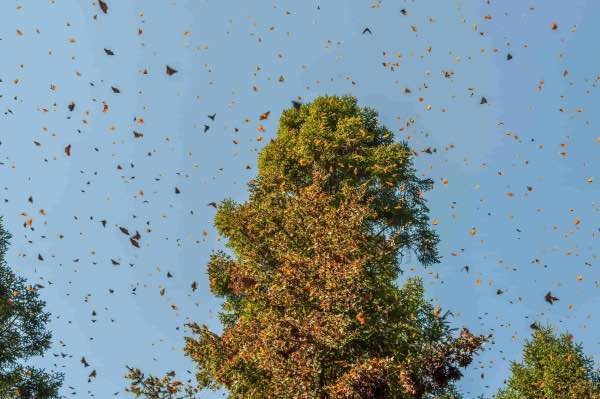 monarch 2 butterfly migration mexico city private tour horse ride valle del bravo lunch stop