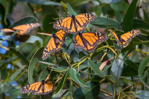 monarch close up butterfly migration mexico city private tour