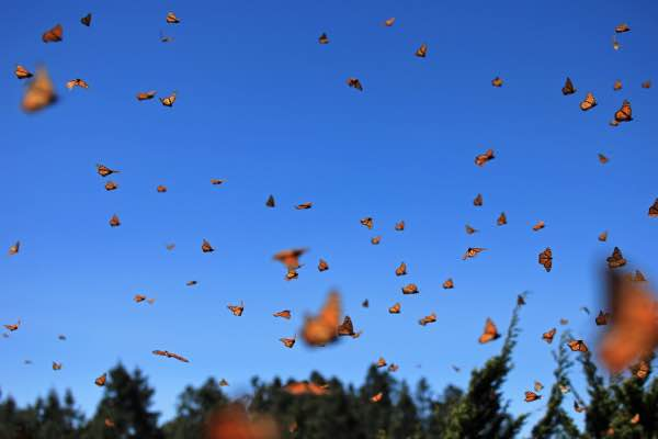 monarch butterfly migration mexico city private tour photographer nature lover mexico 4