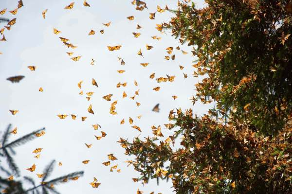 monarch butterfly 3 migration mexico city private tour horse ride valle del bravo lunch stop