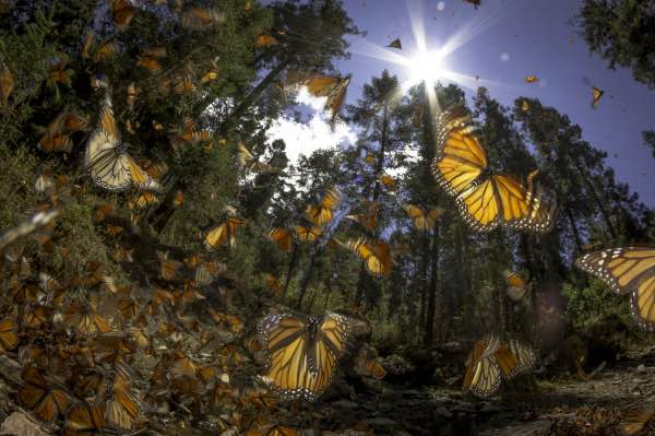 monarch butterfly how to experience mexico city