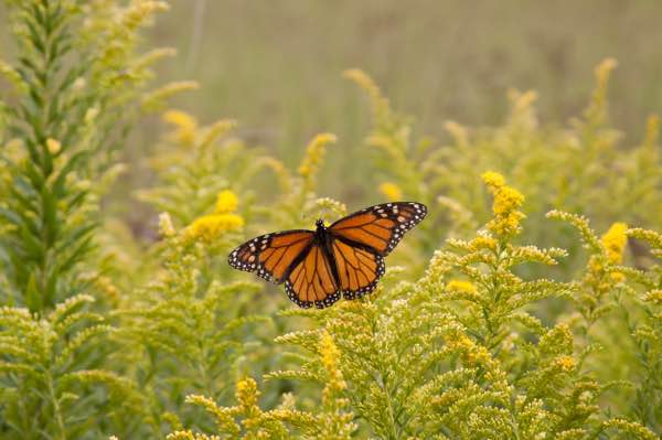 6 monarch butterfly migration mexico city private tour photographer nature lover mexico