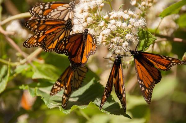 monarch butterfly migration mexico city private tour photographer nature lover mexico